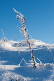 зима травы Стоковое Фото