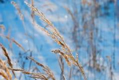 зима травы Стоковые Изображения RF