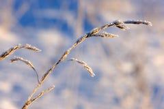 зима травы Стоковое Изображение