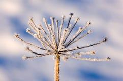 зима травы Стоковая Фотография