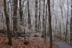 зима тропки гуляя Стоковые Изображения RF