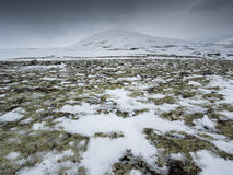 зима Украины горы ландшафта dragobrat Стоковые Фото