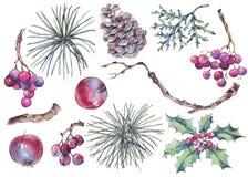 Зима установила винтажного флористического украшения с листьями, сосны, branc иллюстрация вектора