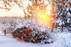 зима утра солнечная снежок сада Стоковые Фото