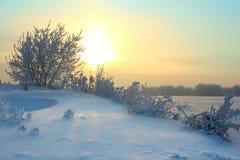 зима утра Стоковое Изображение