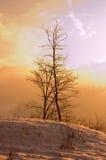зима утра Стоковые Фотографии RF
