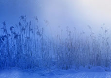 зима утра Стоковые Изображения
