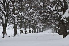 зима Финляндии хмурая Стоковые Изображения RF