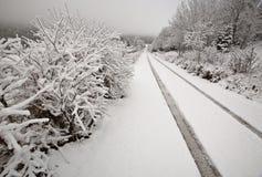 зима холмов дня кипариса Стоковое Изображение RF
