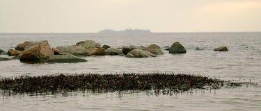 Зима Чёрное море Ветви дерева над водами Чёрного моря Береговая линия песчаного пляжа на пасмурный день Стоковое Изображение RF