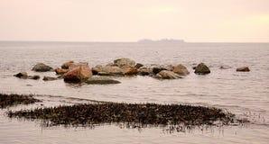 Зима Чёрное море Ветви дерева над водами Чёрного моря Береговая линия песчаного пляжа на пасмурный день Стоковое Изображение