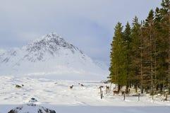 Зима Шотландии Стоковые Изображения RF