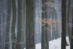 зима шторма снежка пущи Стоковые Изображения