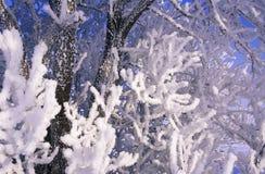 Зима 002 стоковая фотография