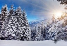зима стоковые фото