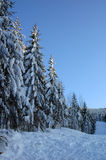 зима 3 ландшафтов Стоковое Изображение