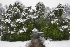 зима 41 Стоковая Фотография RF