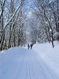 зима стоковая фотография rf