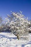 зима Стоковое Изображение