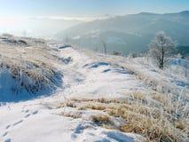 зима 9 ландшафтов Стоковая Фотография RF