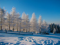 Зима Amazig Стоковое Фото