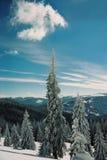зима carpathians Стоковые Фото