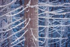 зима fairy пущи Стоковое Изображение RF