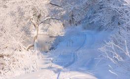 зима fairy пущи Стоковые Фотографии RF