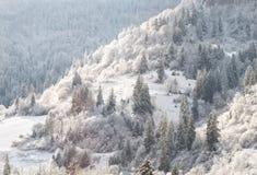 зима fairy пущи Стоковые Изображения