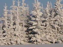 зима fairy пущи Стоковое Фото