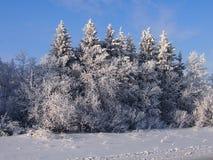 зима fairy пущи Стоковое фото RF