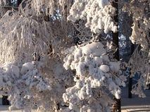 зима fairy пущи Стоковые Изображения RF