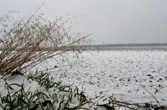 Зима field Стоковое Изображение