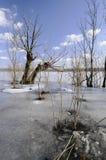 зима flooding стоковая фотография