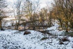 Зима Forrest Sceen как проломы Солнця после полудня в течении Tr Стоковое Изображение RF