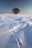 зима ii Стоковая Фотография