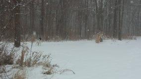 Зима Maybee Стоковое Изображение RF