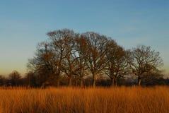зима richmond парка Стоковые Фото