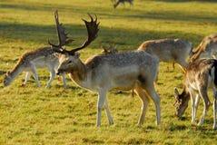 зима richmond парка Стоковые Изображения