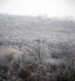 зима snezka горы ландшафта предпосылки чехословакская самая высокая Стоковая Фотография