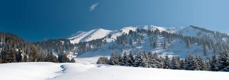 Зима Snowy в горе стоковое изображение rf