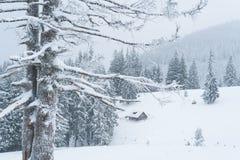 Зима Snowy в лесе горы Стоковые Фотографии RF