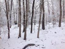 Зима Snowy Стоковые Фотографии RF