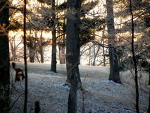 Зима Solice Стоковая Фотография