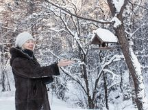зима st petersburg парка jelagin острова стоковое изображение