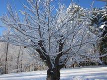 Зима Treescape - день стоковое фото rf