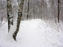 зима trope стоковая фотография rf