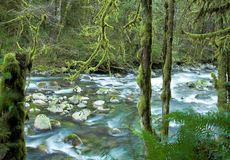 зима wallace реки Стоковое фото RF