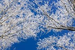 Зима Whit в forrest Стоковое Фото