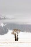 зима yellowstone хлопоков Стоковые Изображения